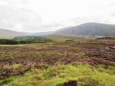 Wicklow Mountain area, Ireland