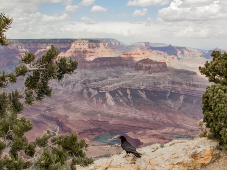 Grand Canyon_53_160516.jpg