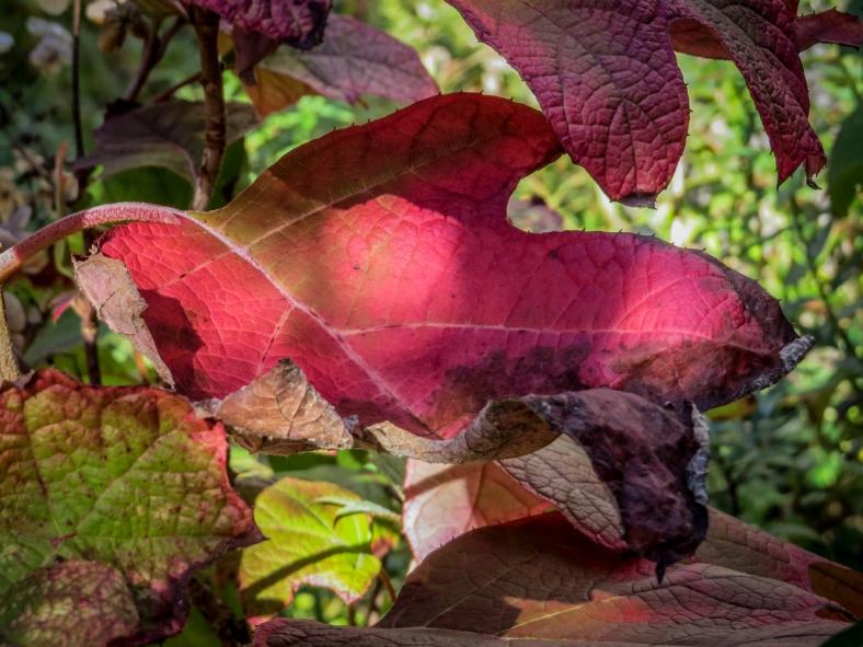 fallflowers16-18