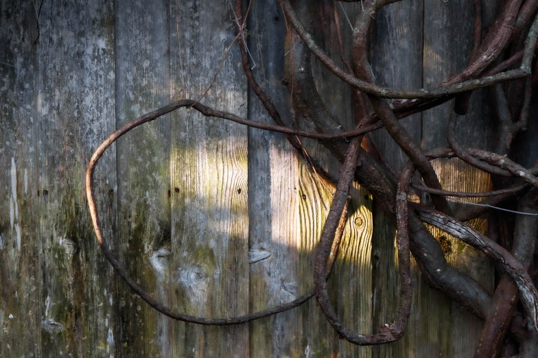 shartwig_-5